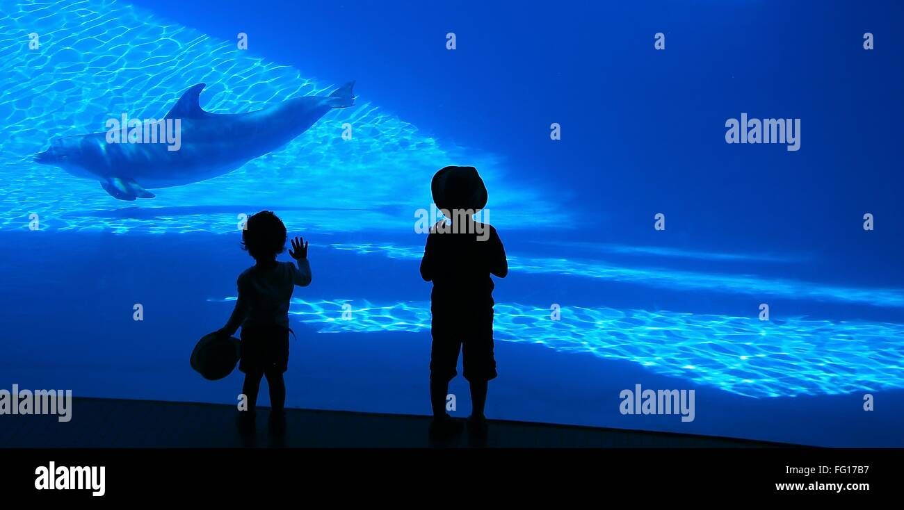 Silhouette Children Watching Dolphin Swimming In Aquarium - Stock Image
