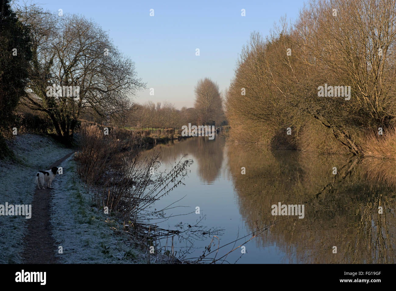 Kennet and Avon Canal on Hungerford Common with frost on the shadow side and tree reflections in the still water - Stock Image