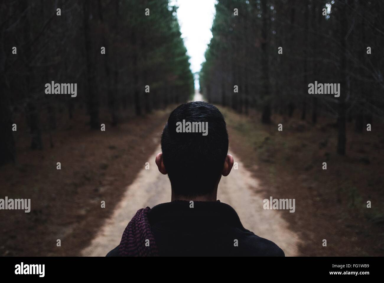 Hiker Looking At Forest - Stock Image