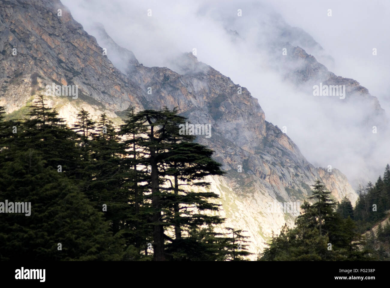 Himalayan landscape and evening light and bad weather at Gangotri , Uttaranchal , India - Stock Image