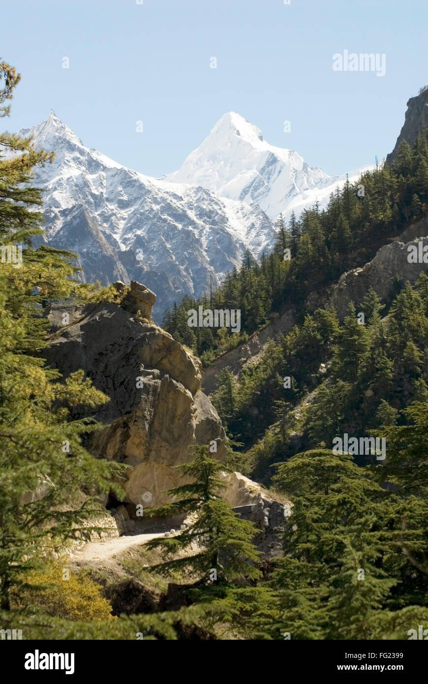 Gangotri national park at Gangotri and Himalayan snow on mountain peak of Sudarshan , Uttaranchal , India - Stock Image