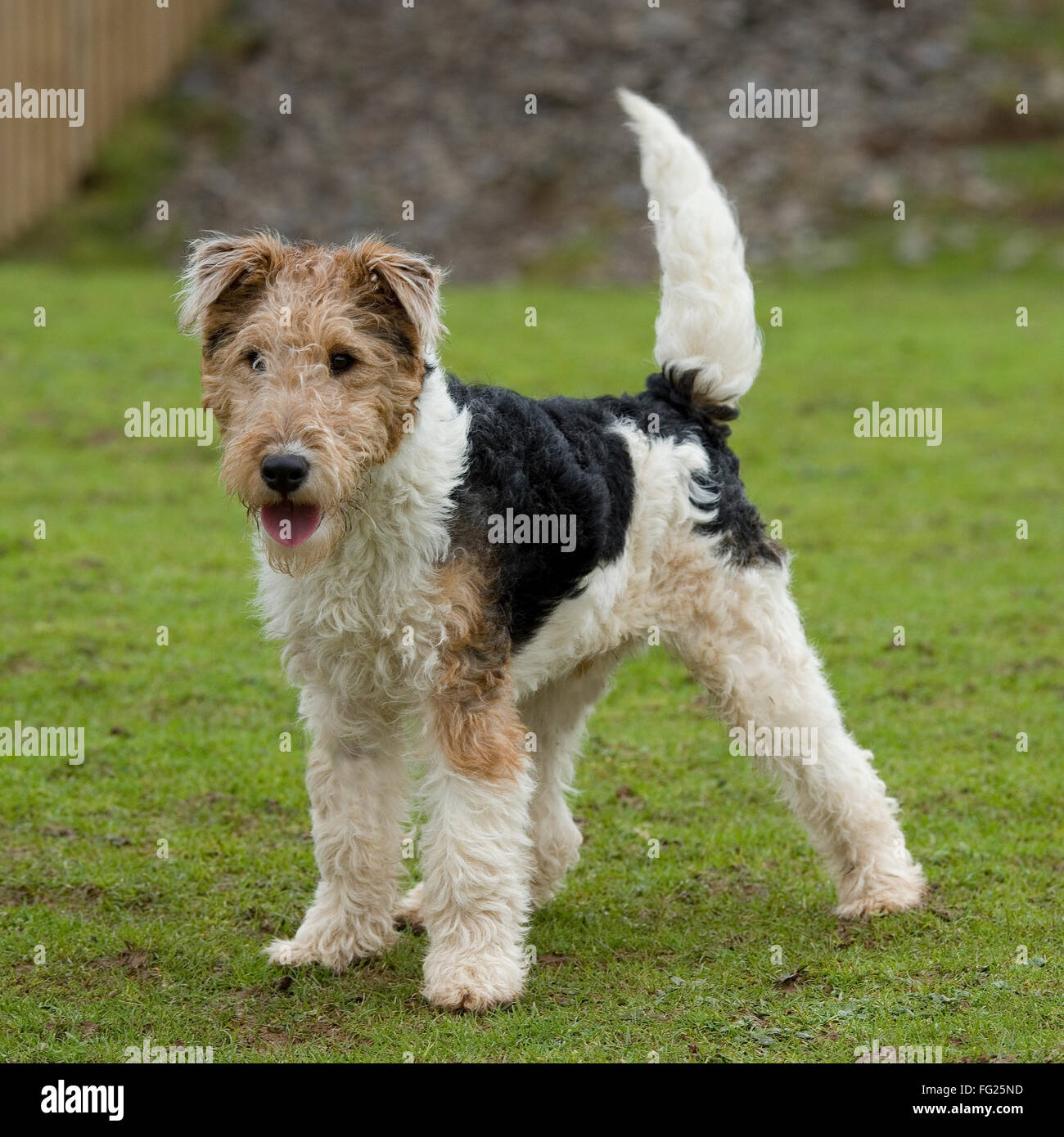 Wirehaired Fox Terrier Photos Wire Center Board Makeriso Pcb Makerprinted Circuit Product On Related Images