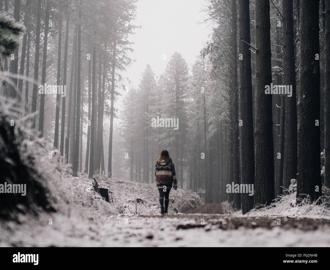Rear View Of Woman Walking In Forest Stock Photo
