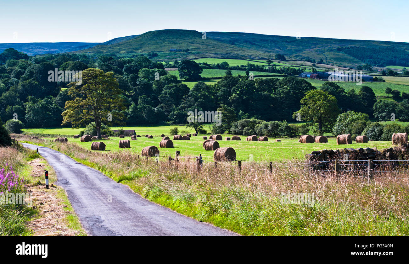 Country lane passing through farmland (field with round hay bales),  Westerdale, North York Moors, North Yorkshire, - Stock Image