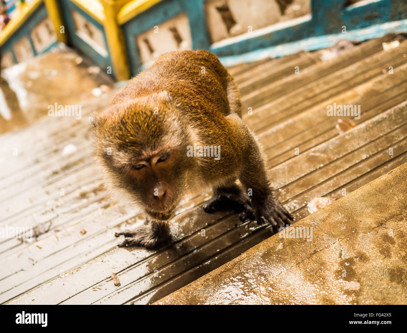 High Angle View Of Monkey On Steps - Stock Image