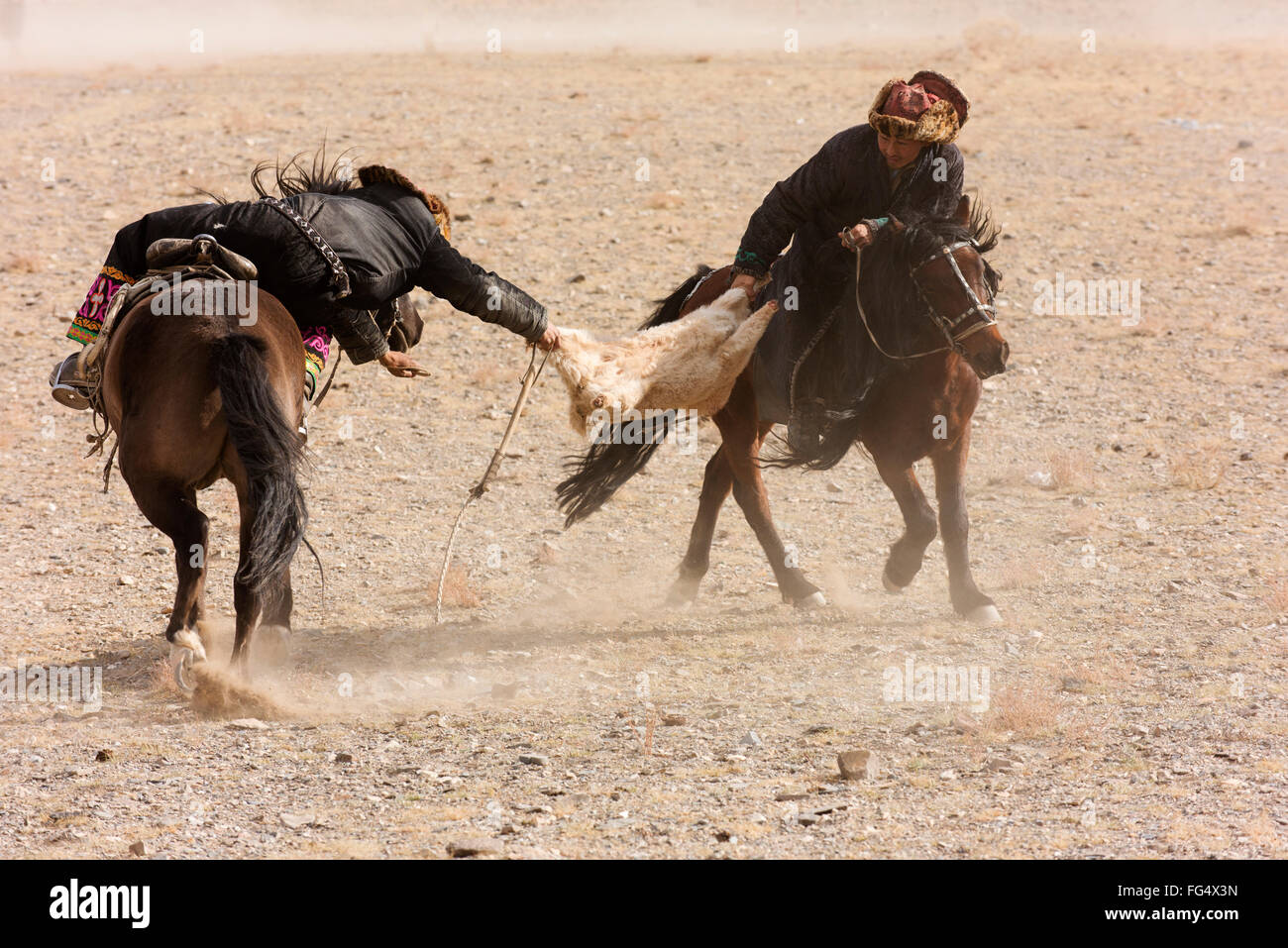 Men partaking in a traditional tug of war with a goat carcass at the Golden Eagle Festival near Ulgii. Stock Photo