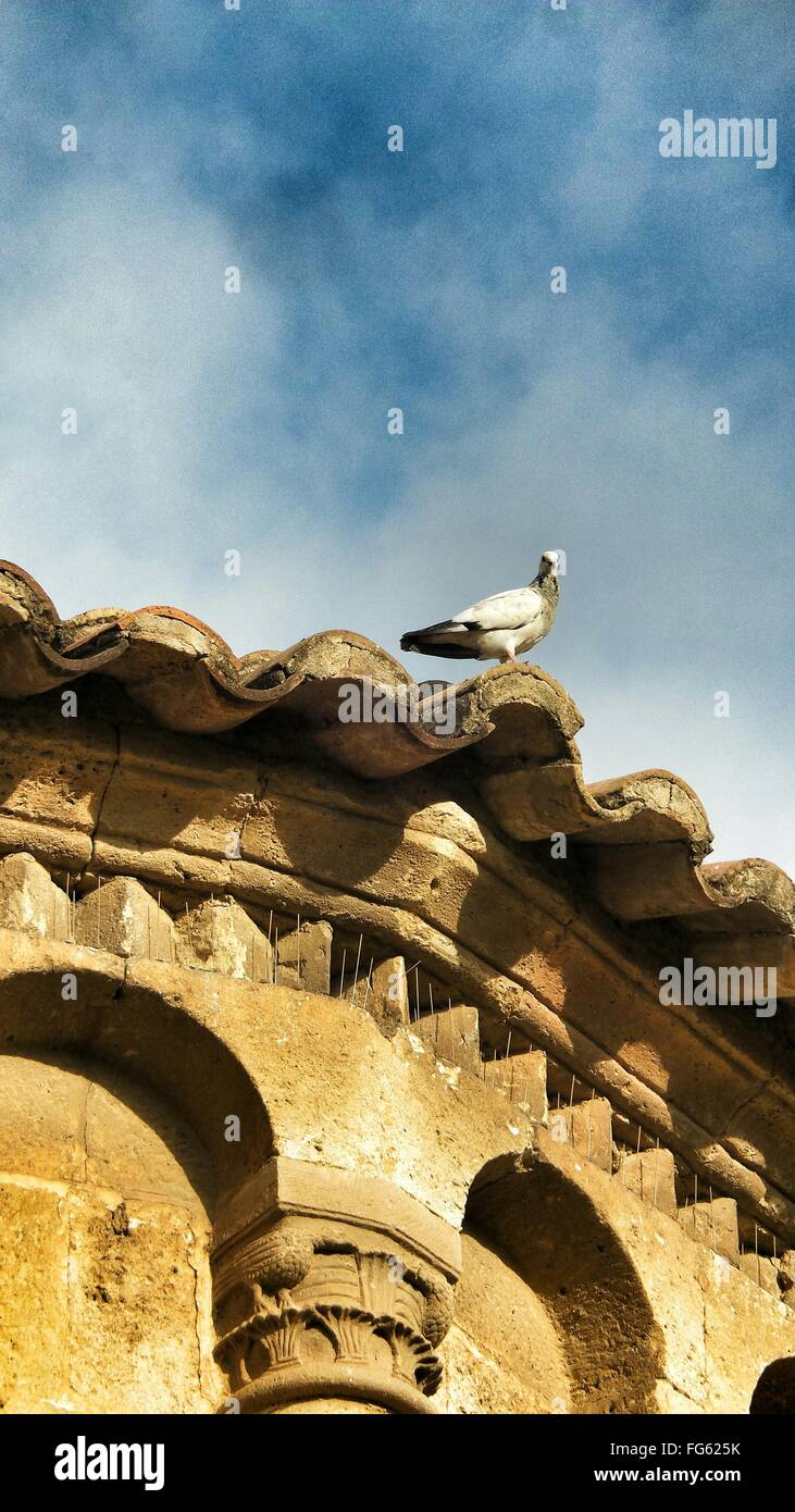 Pair Of Pigeon Siting On Rooftop - Stock Image