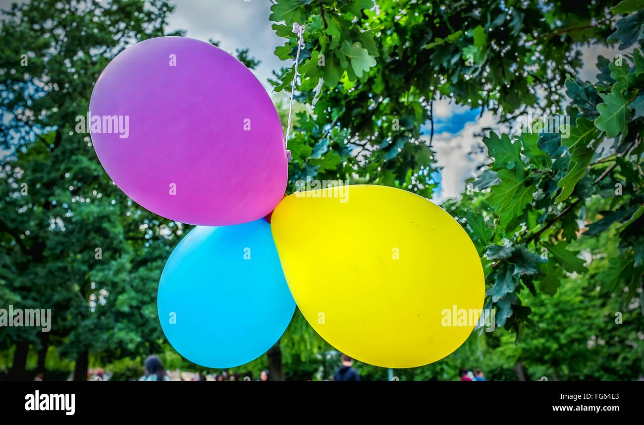Multi Colored Balloons - Stock Image