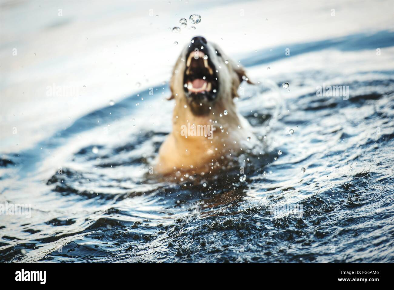 domestic dog stock photos  u0026 domestic dog stock images