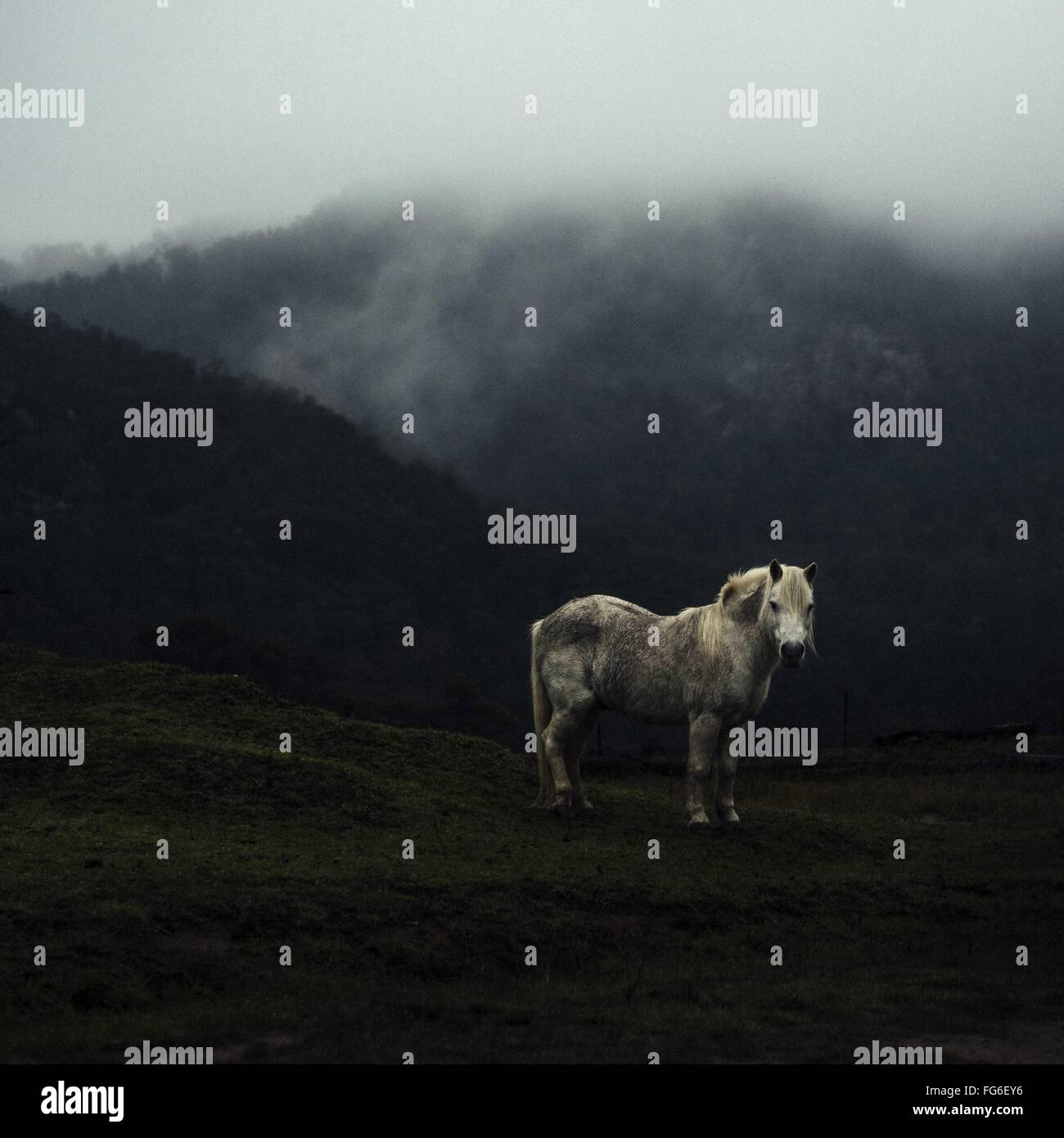 Horse On Mountain In Foggy Weather - Stock Image