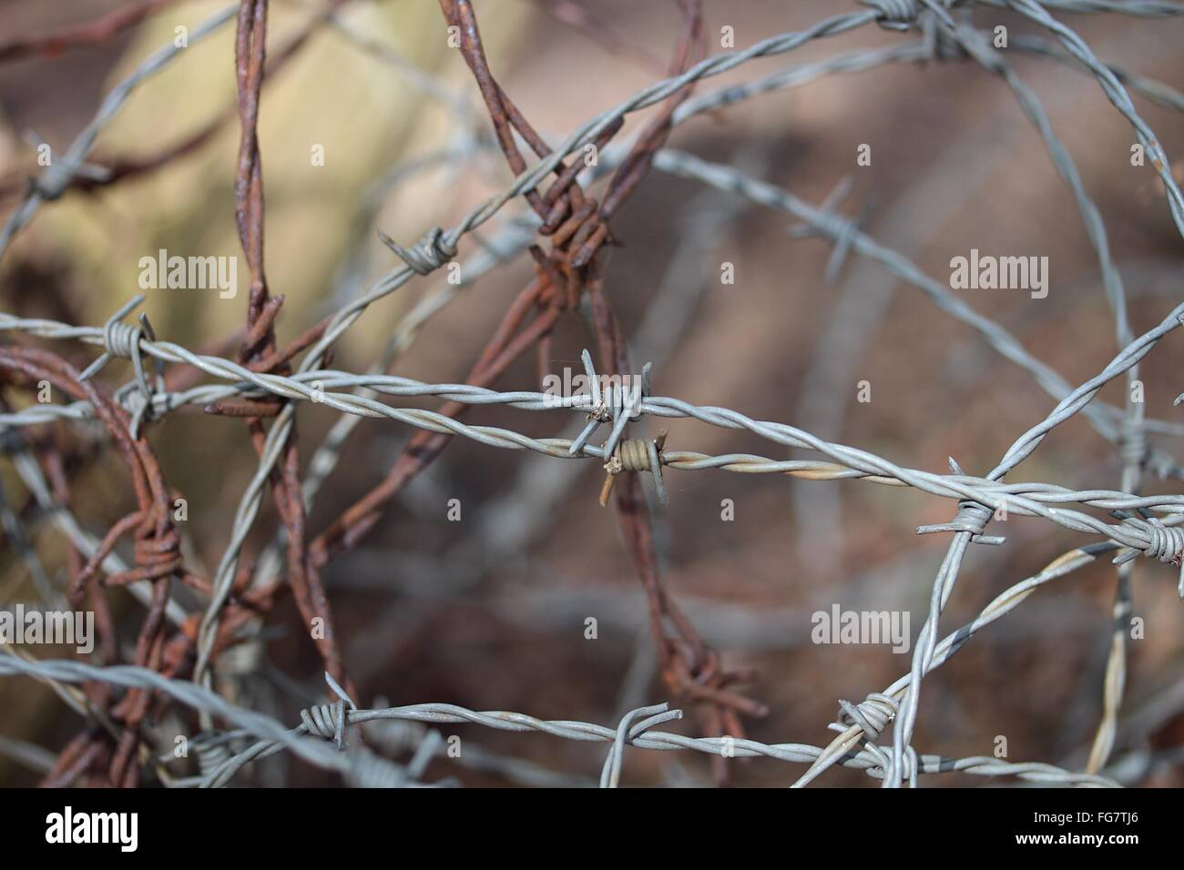Close-Up Of Barbed Wire Fence - Stock Image