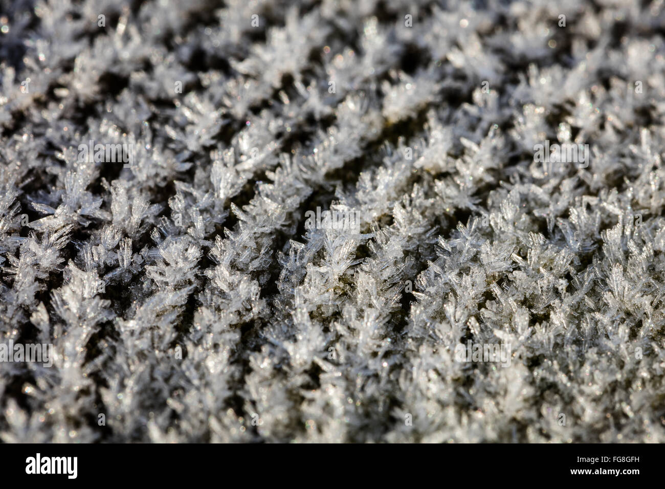 Ice crystals on a fence post in the Peak District, Derbyshire, England UK. Heavy frost & winter conditions, February, Stock Photo