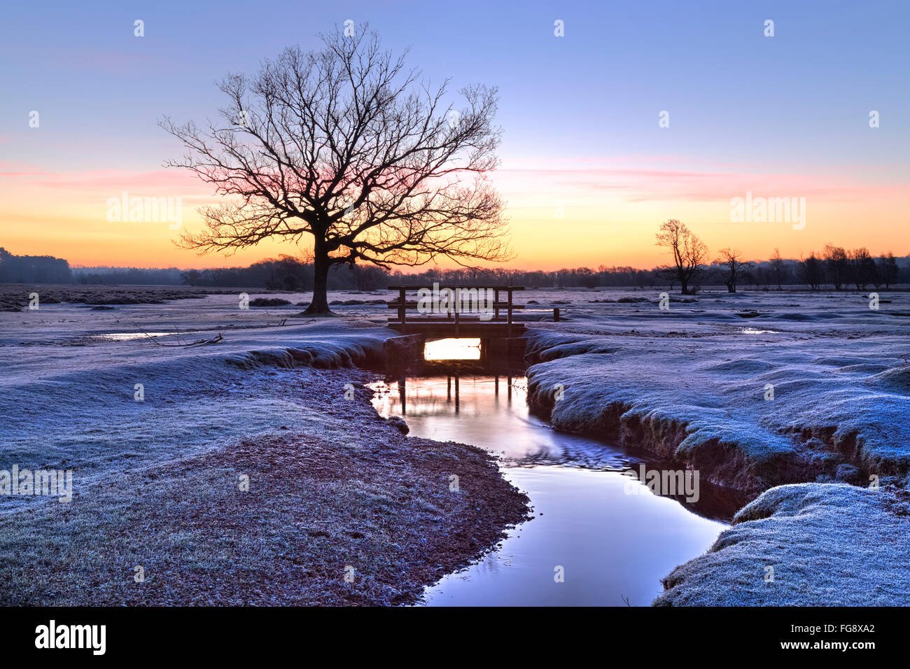 Longwater Lawn; New Forest; Lyndhurst; Hampshire; England; Stock Photo