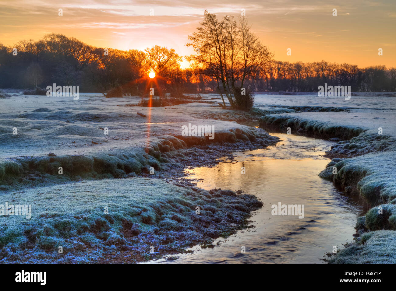 Longwater Lawn; New Forest; Lyndhurst; Hampshire; England; - Stock Image