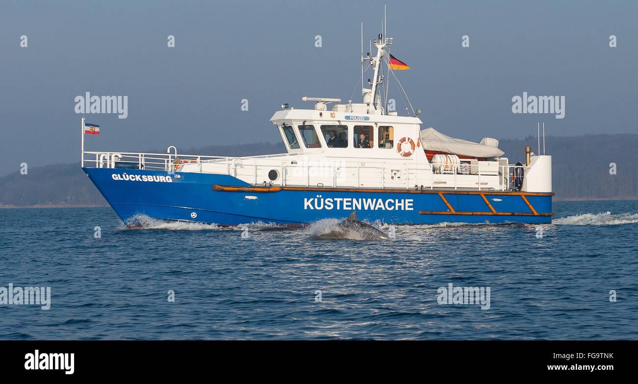 Ein Delfin schwimmt am 18.02.2016 in der Flensburger Förde bei Flensburg (Schlewsig-Holstein) neben dem Streckenboot - Stock Image