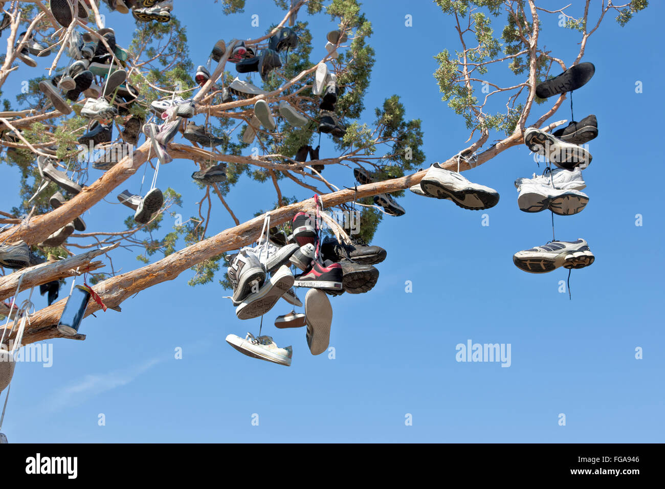 Evergreen tree branch,  suspended unwanted footwear of various styles & sizes slung up by passing motorists. - Stock Image