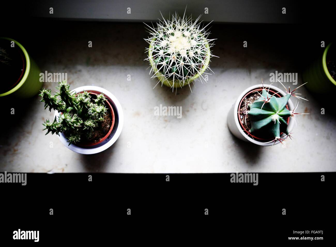 High Angle View Of Potted Plants On Window Sill At Home - Stock Image