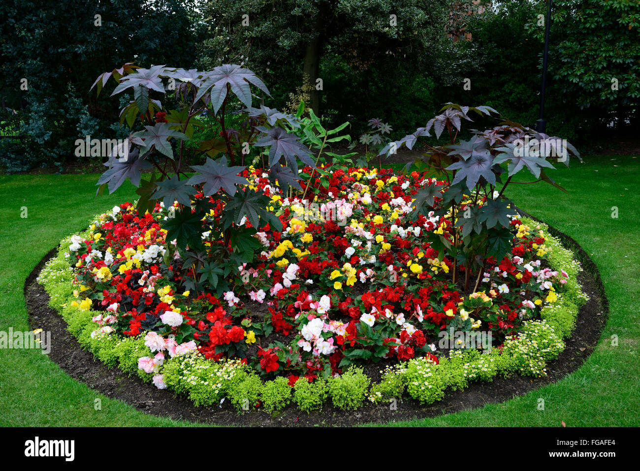 Belfast Botanical Gardens bedding border bed display round circular beds annual annuals colour RM Floral & Belfast Botanical Gardens bedding border bed display round circular ...