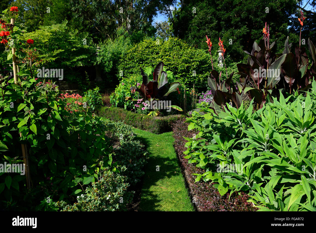 Abyssinia banana Musa ensete ventricosum canna lilies tropical border bed summer tender plant planting scheme RM - Stock Image