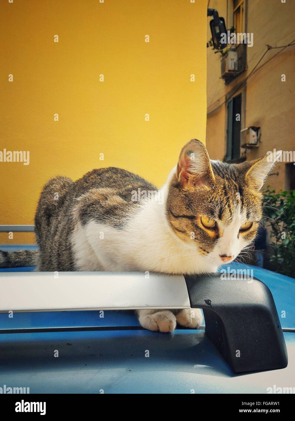 Close-Up Of Cat Sitting On Car Roof Against Yellow Building - Stock Image