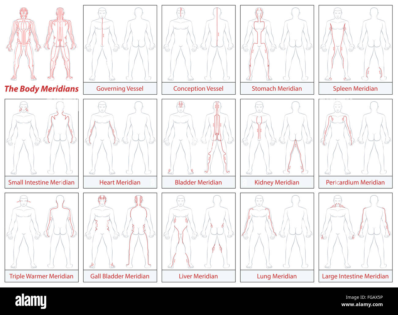 body meridians - schematic diagram with main acupuncture meridians and  their directions of flow