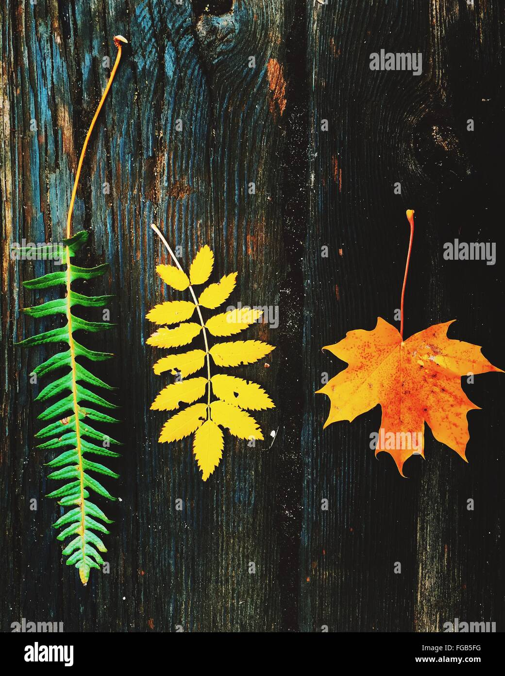High Angle View Of Various Leaf On Wooden Table - Stock Image