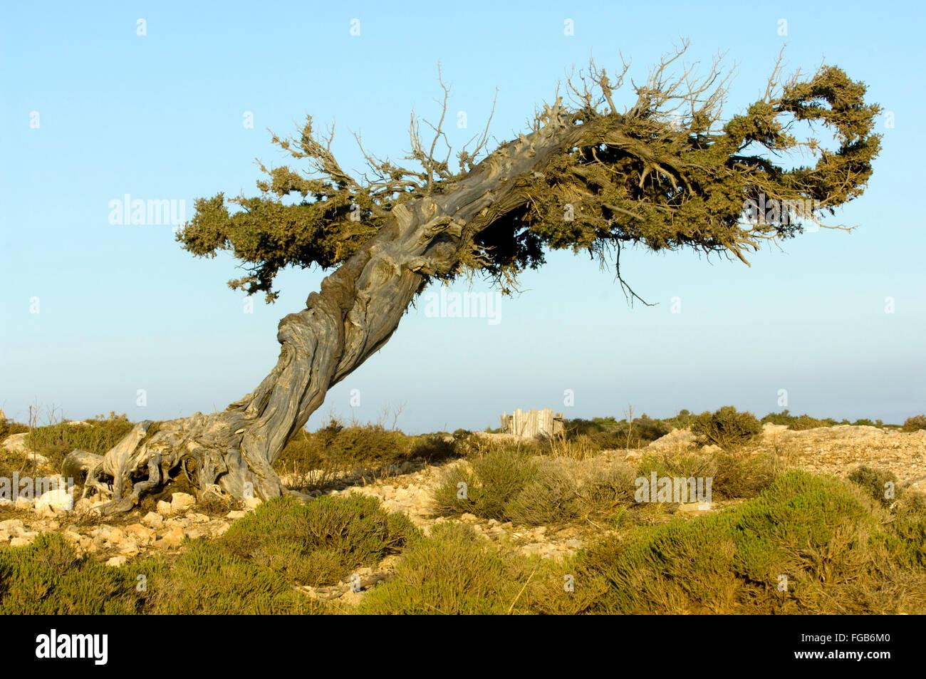 Griechenland, Kreta, Insel Gavdos, Landschaft und Vegetation - Stock Image
