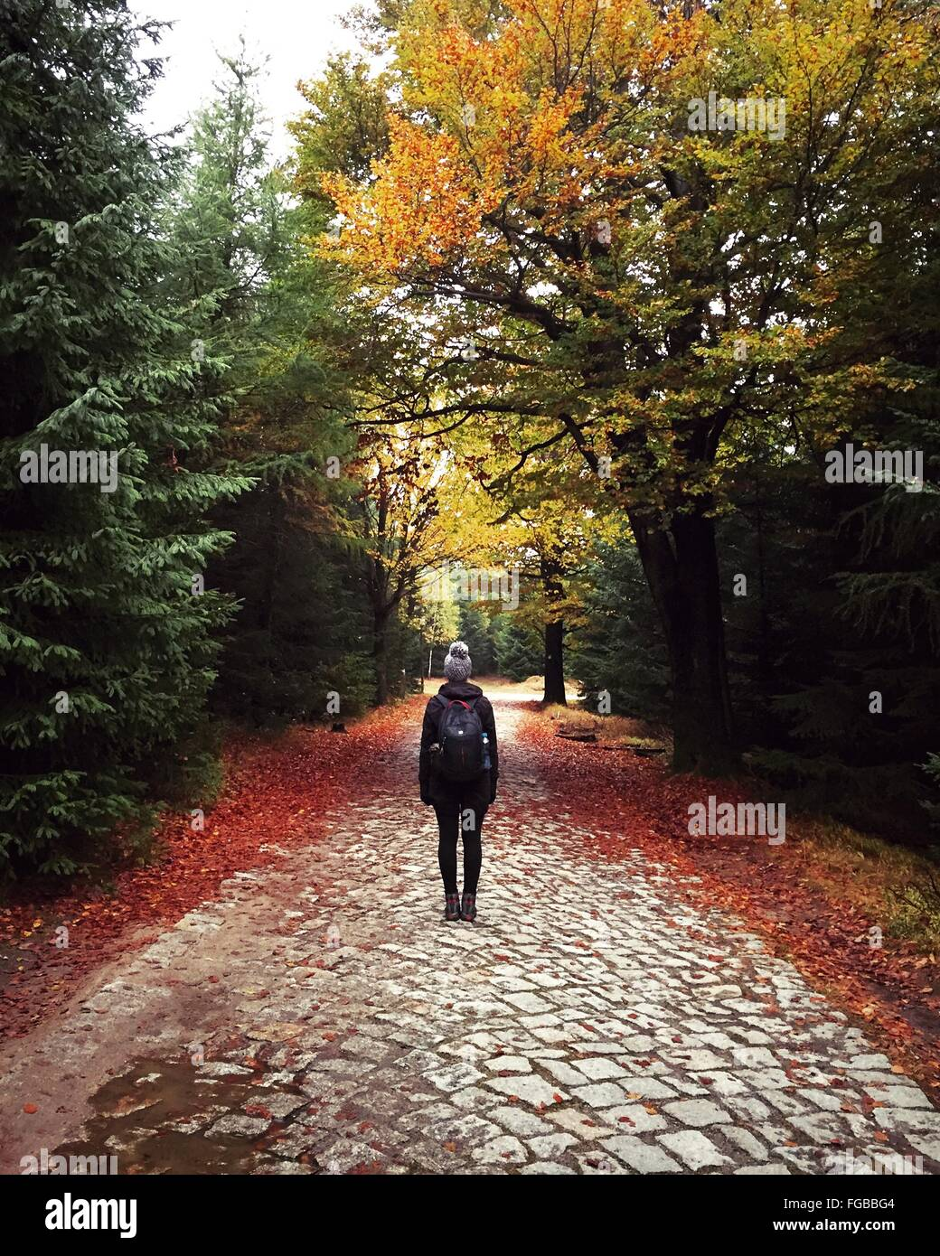 Rear View Of Woman With Backpack Standing On Street Amidst Trees In Forest During Autumn - Stock Image