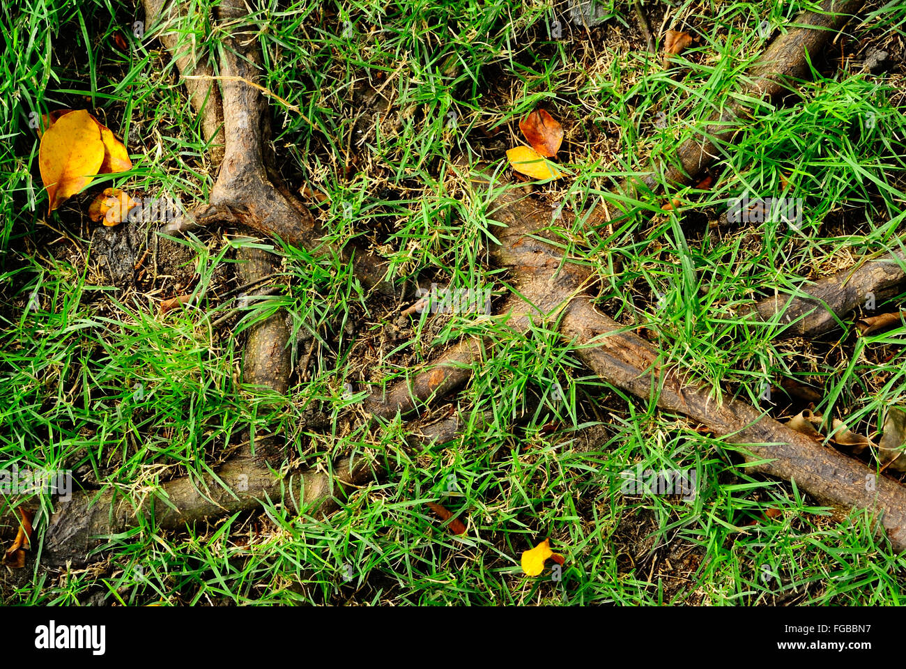 Directly Above Shot Of Grass And Roots - Stock Image