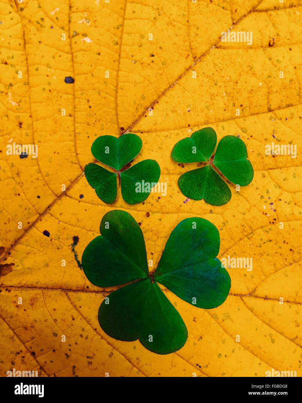 Close-Up Of Leaves Growing Outdoors During Autumn - Stock Image