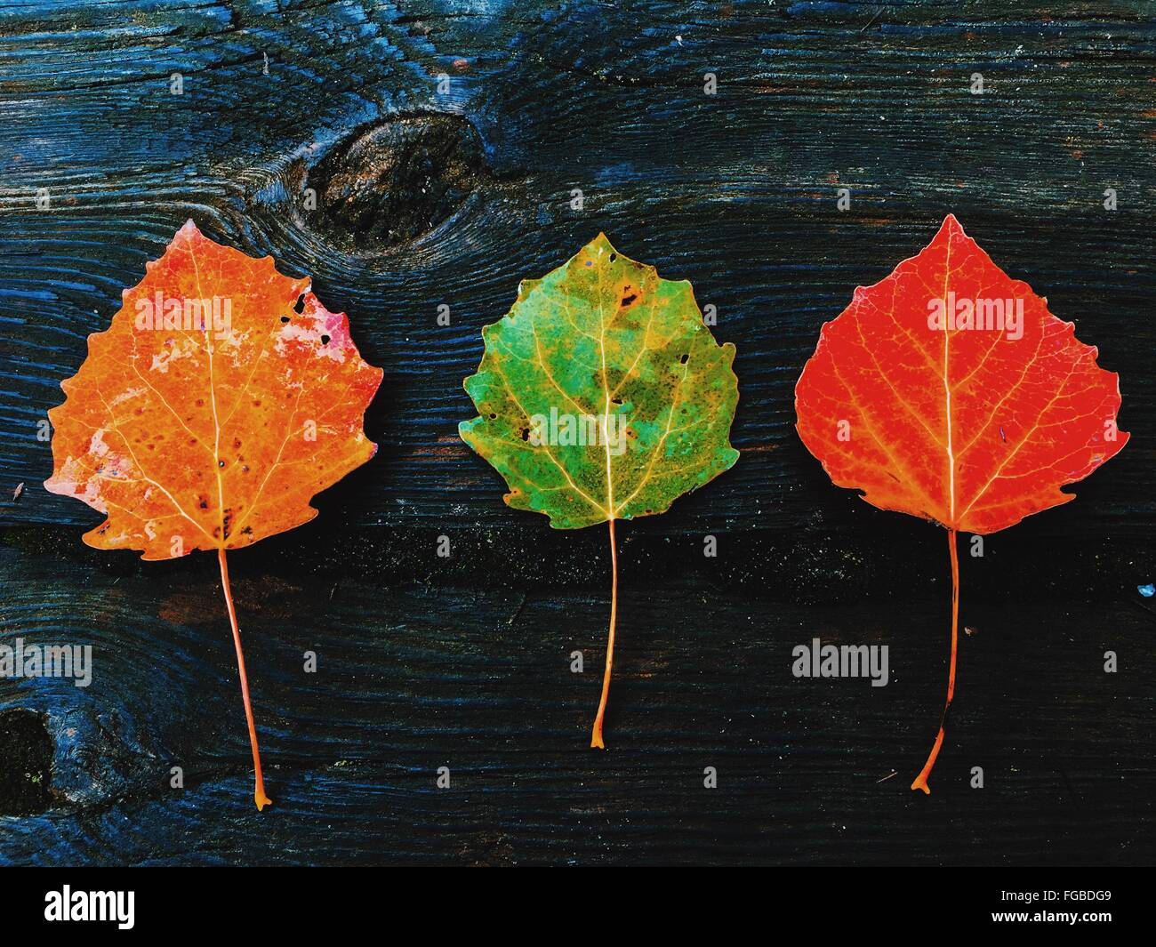 Close-Up Of Colorful Autumn Leaves On Wood - Stock Image