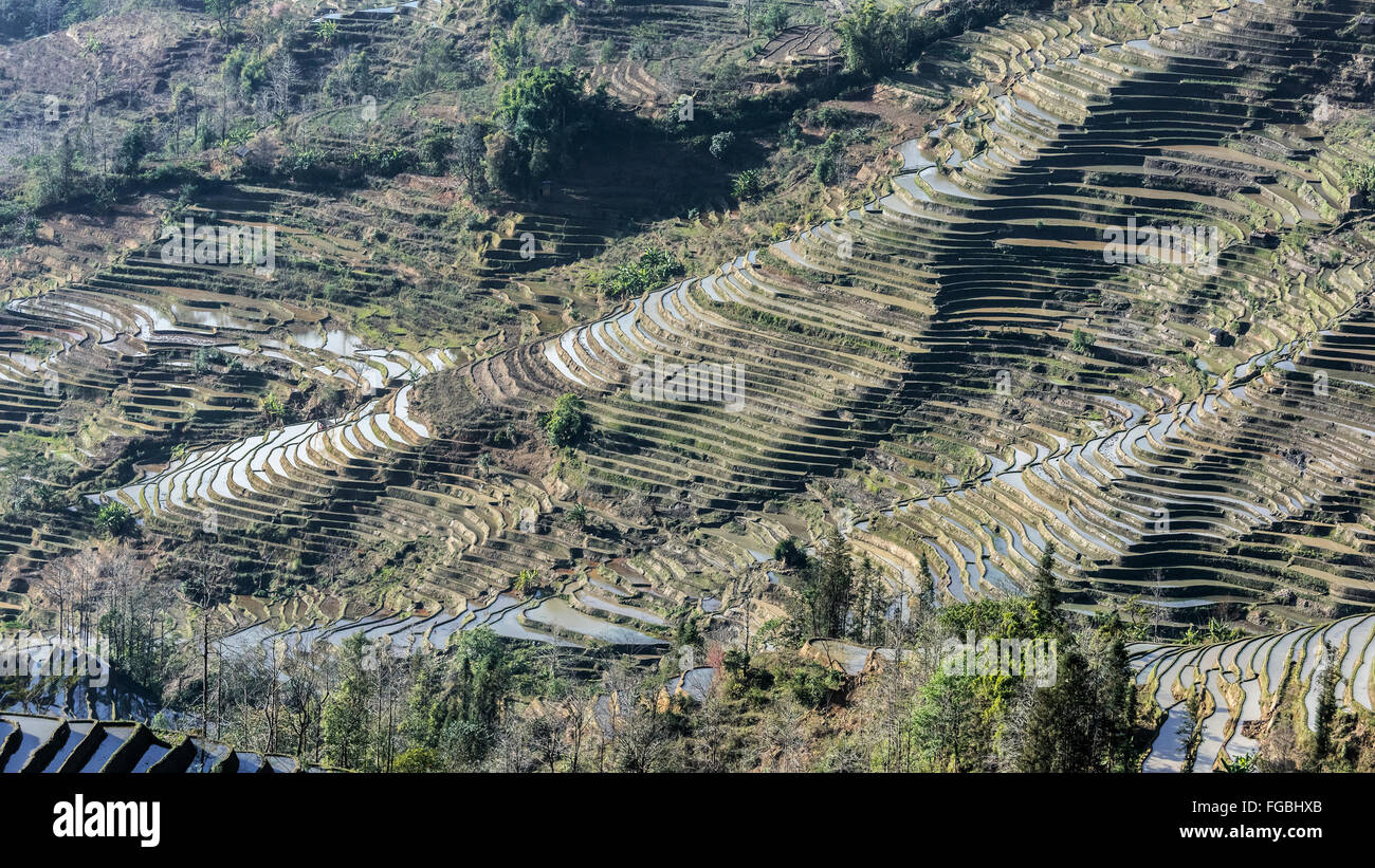 Laohuzui (Tiger's Mouth) scenic rice terraces, Yunnan Province, China - Stock Image