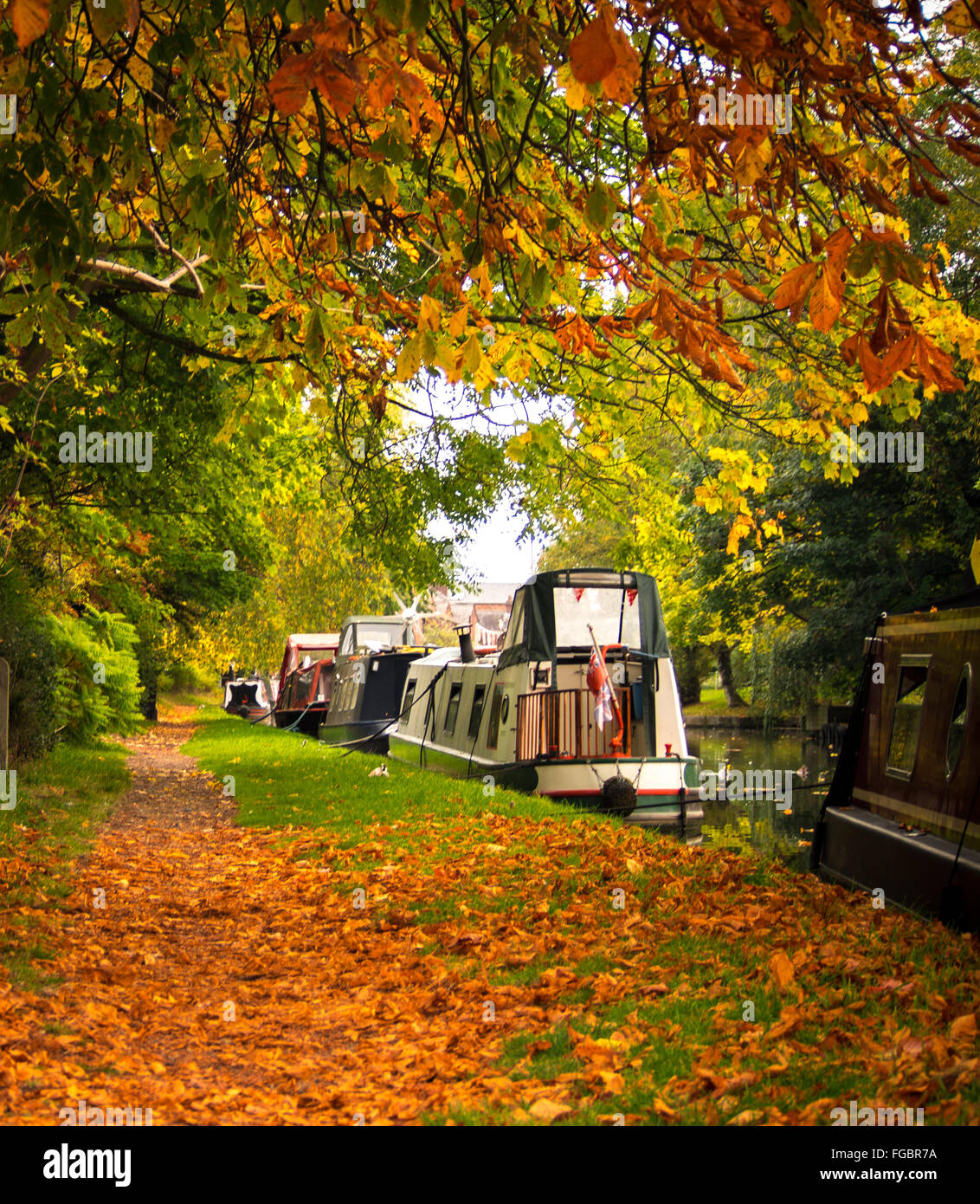 Boats Moored In Bridgewater Canal By Trees During Autumn - Stock Image