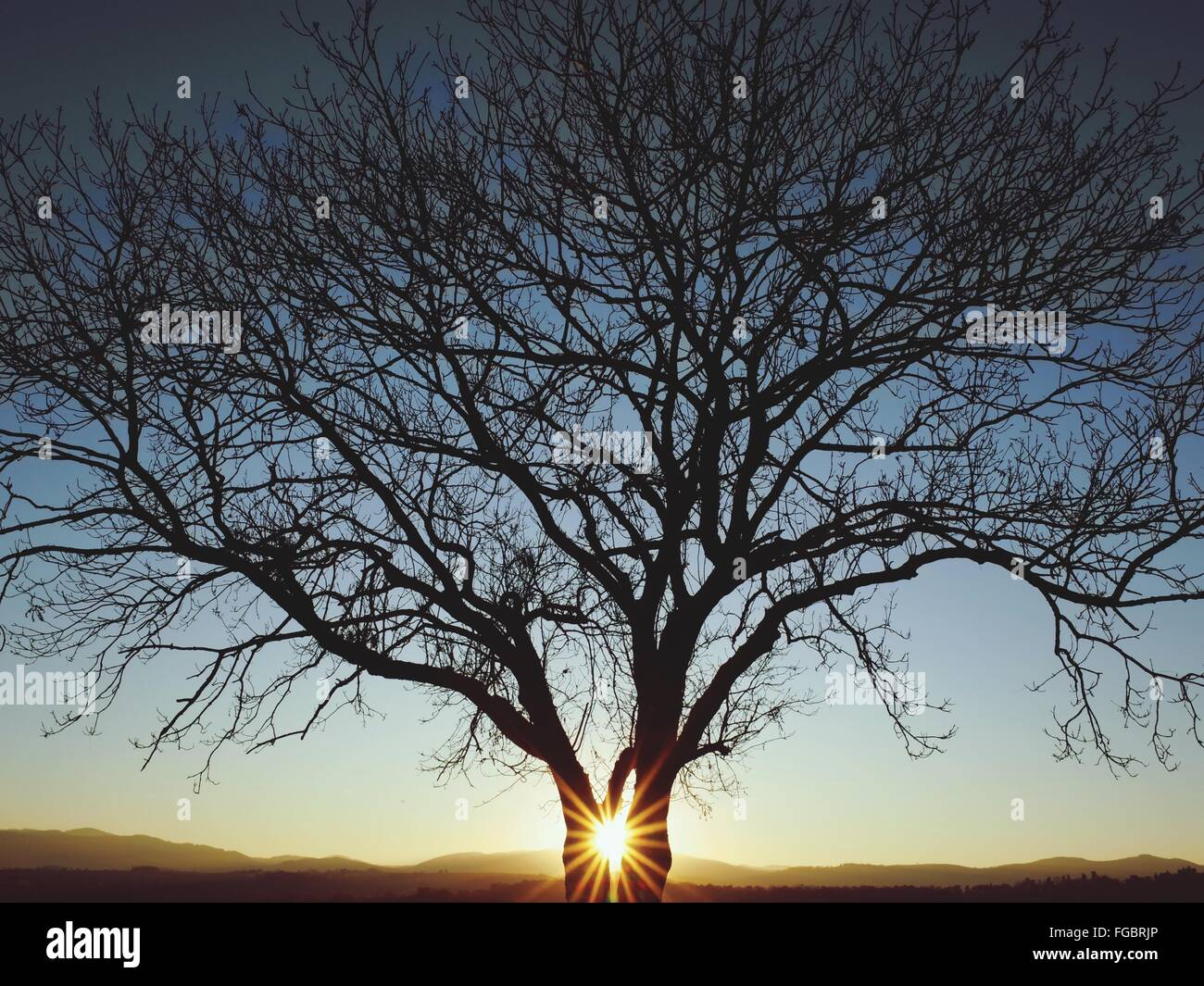 Silhouette Bare Tree Against Sky During Sunset - Stock Image