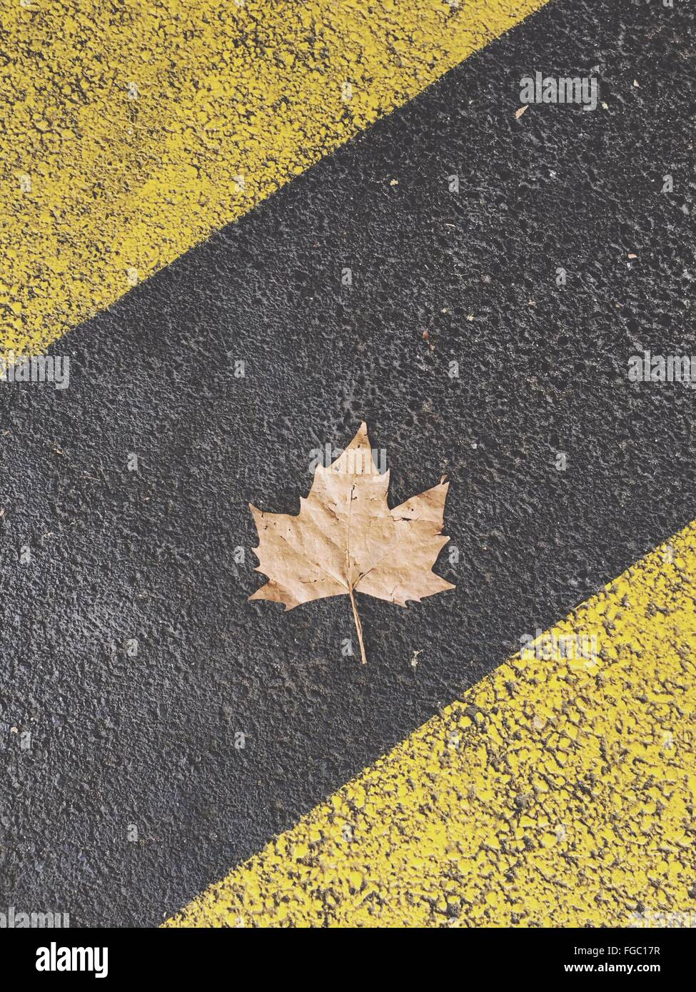 High Angle View Of Dry Maple Leaf On Street - Stock Image