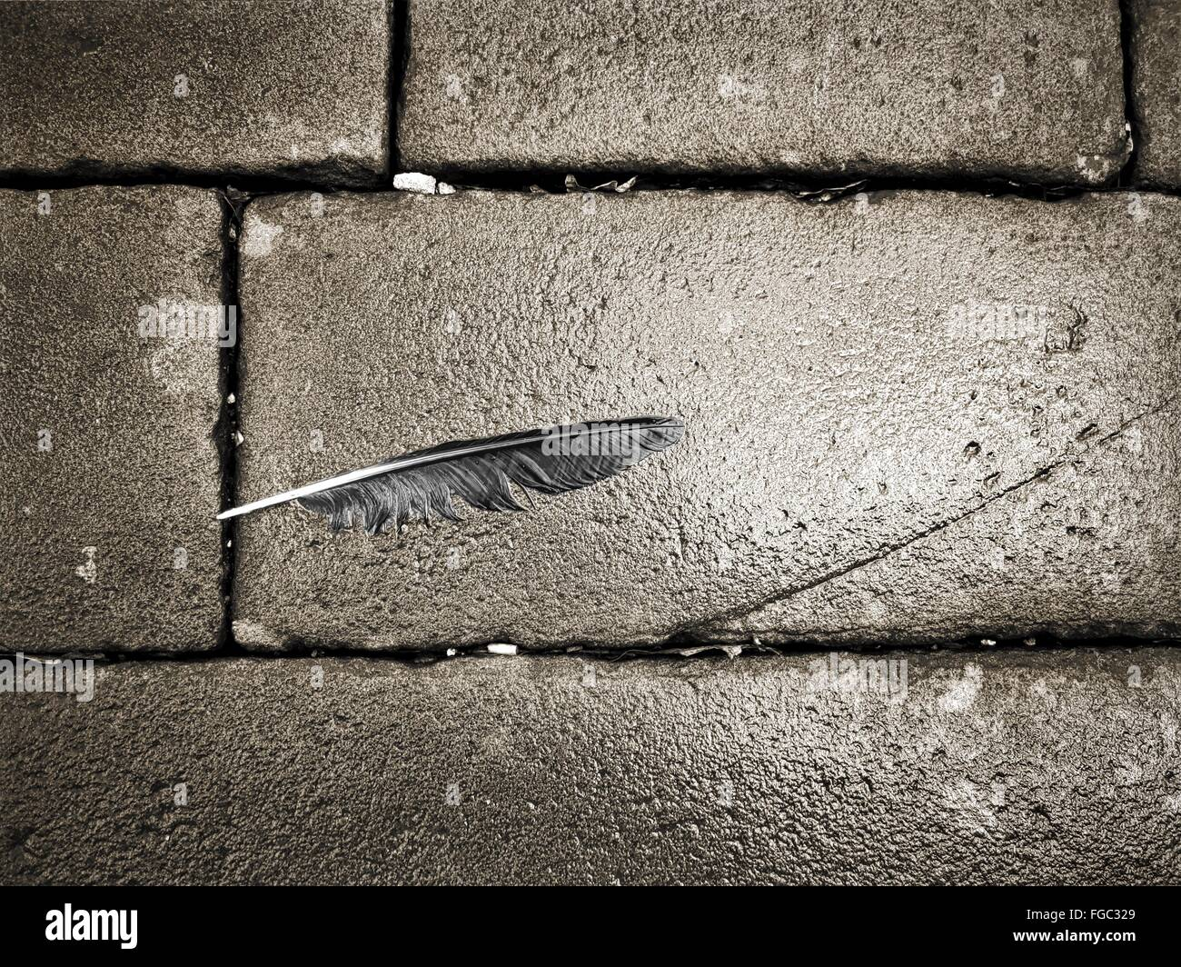 High Angle View Of Feather On Wet Street - Stock Image