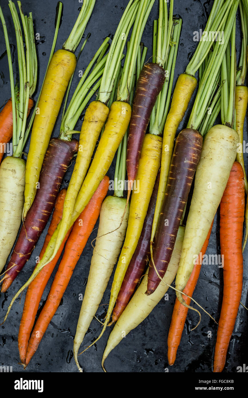 Rainbow carrots on black background - Stock Image