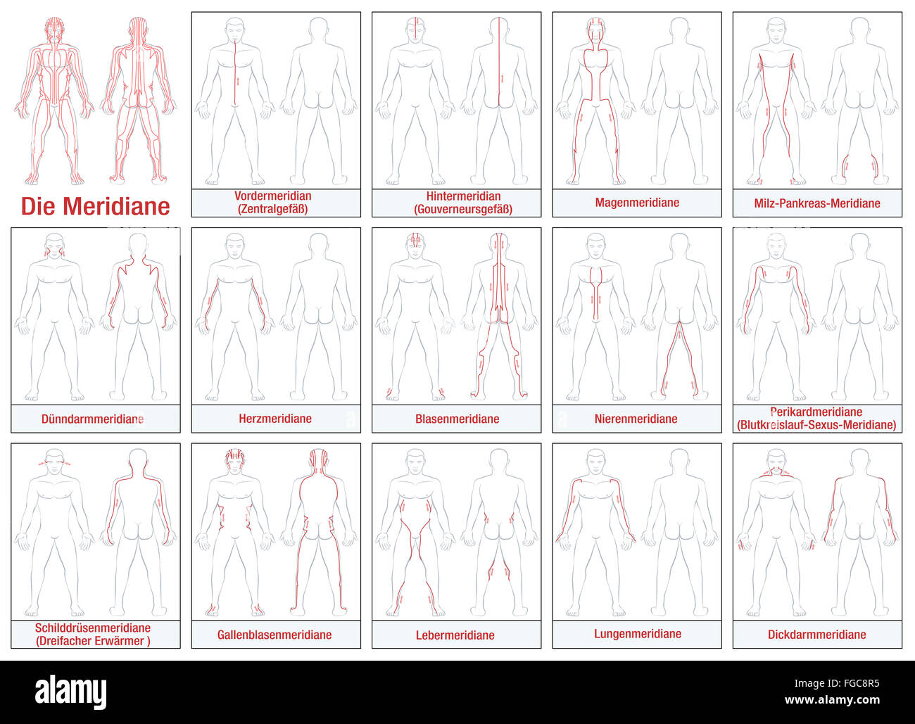Schematic Body Stock Photos Images Alamy Meridians German Labeling Diagram With Main Acupuncture And Their Directions Of