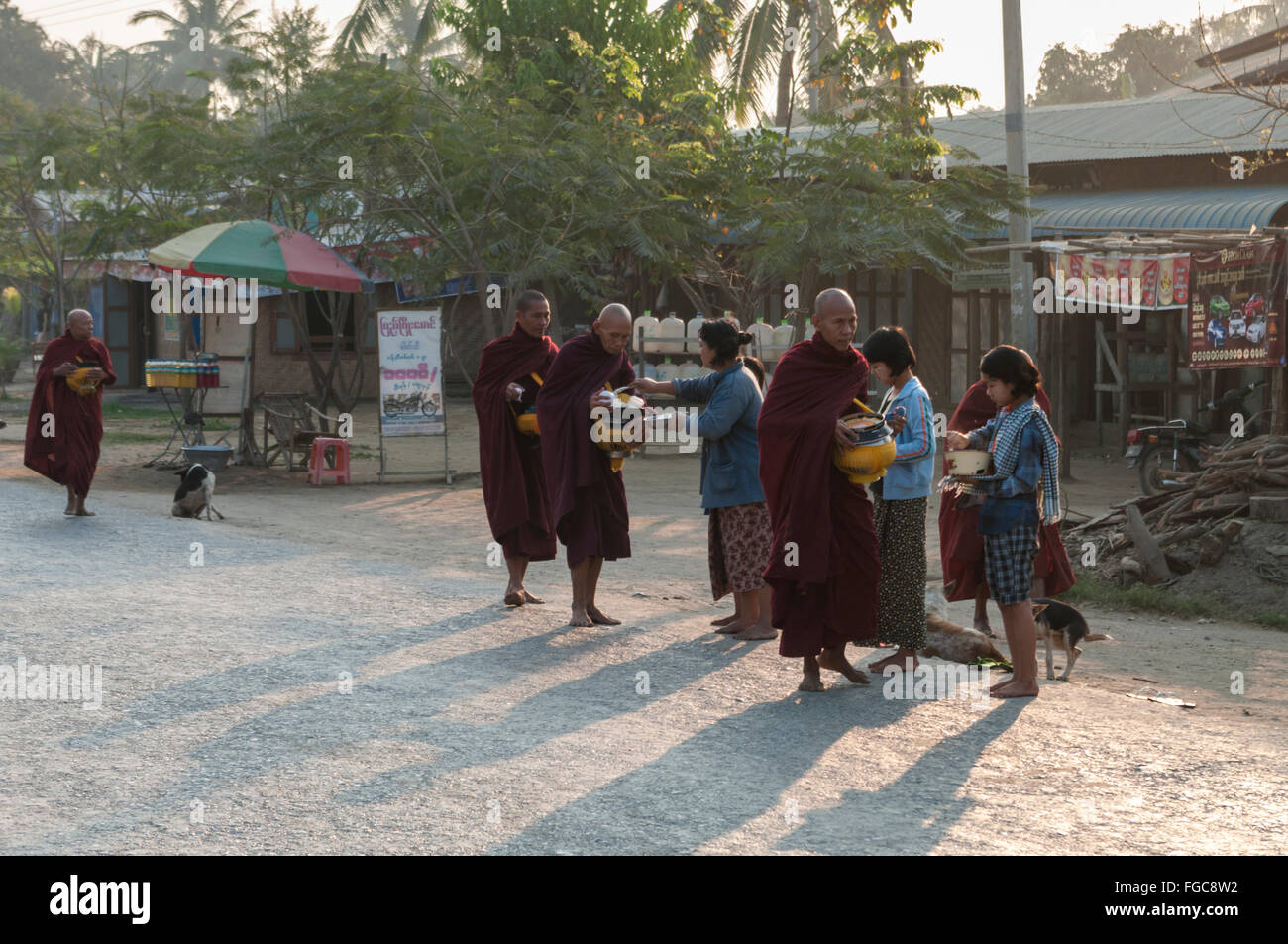 Burmese monks on alms round in early morning, receiving food alms from the pople of Shwe Kyet Yet, Mandalay Region, Stock Photo