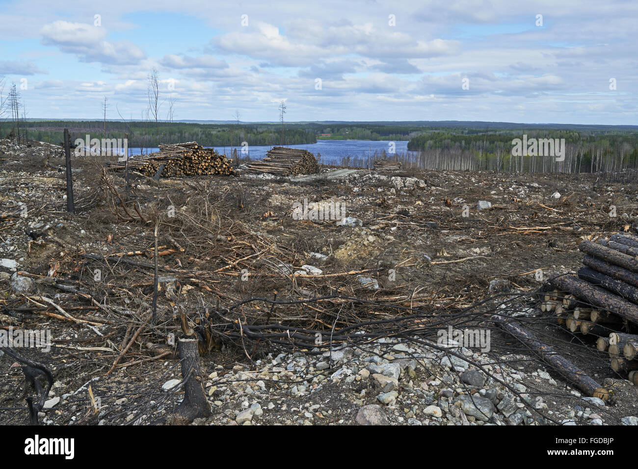 Aftermath of fire in coniferous forest, near Angelsberg, Fagersta Municipality, Vastmanland, Sweden, May - Stock Image