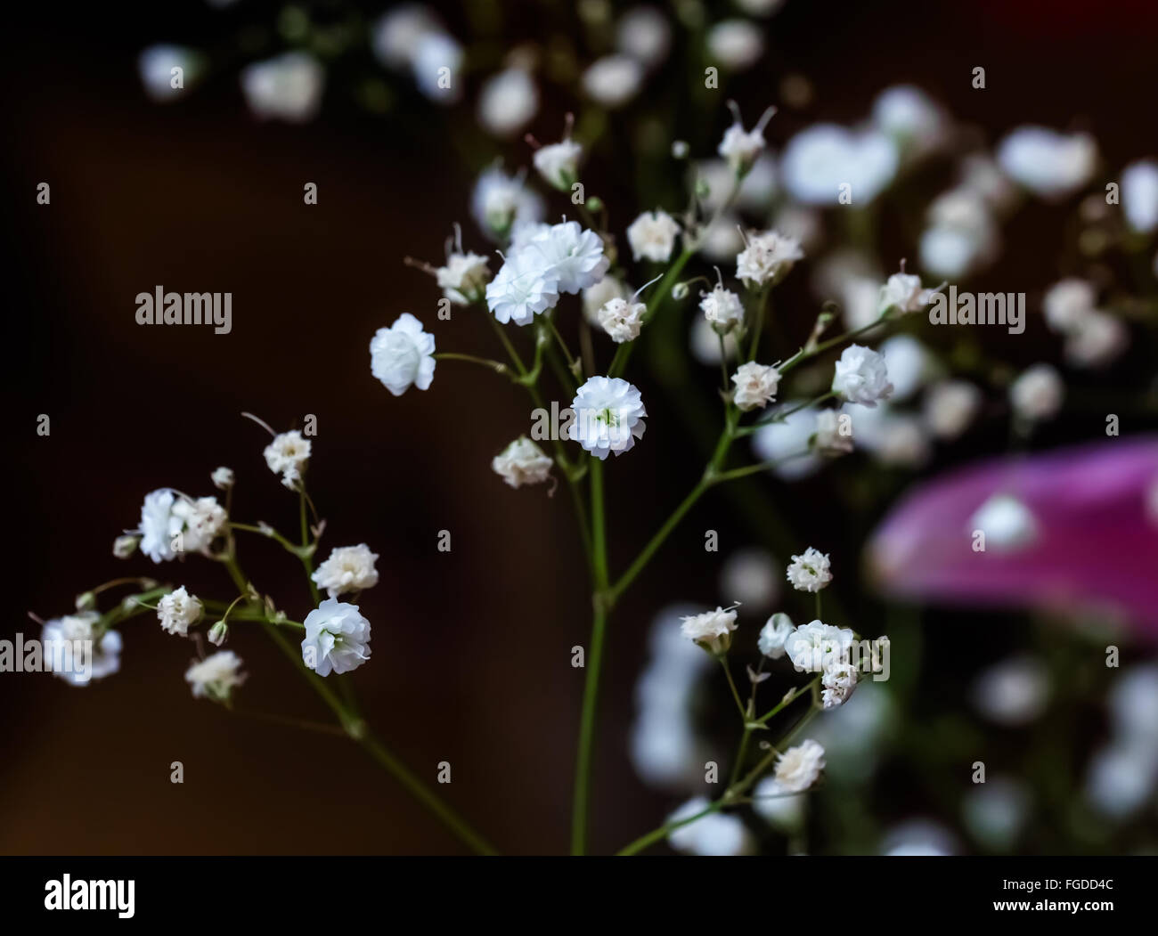 Small white nice flowers like dance in twilight - Stock Image
