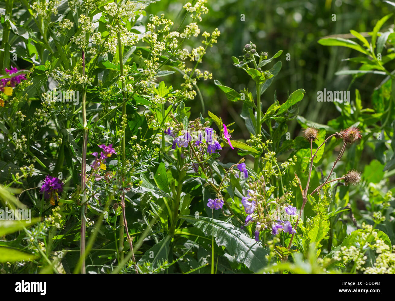 Wild flowers on sunny summer day in forest - Stock Image