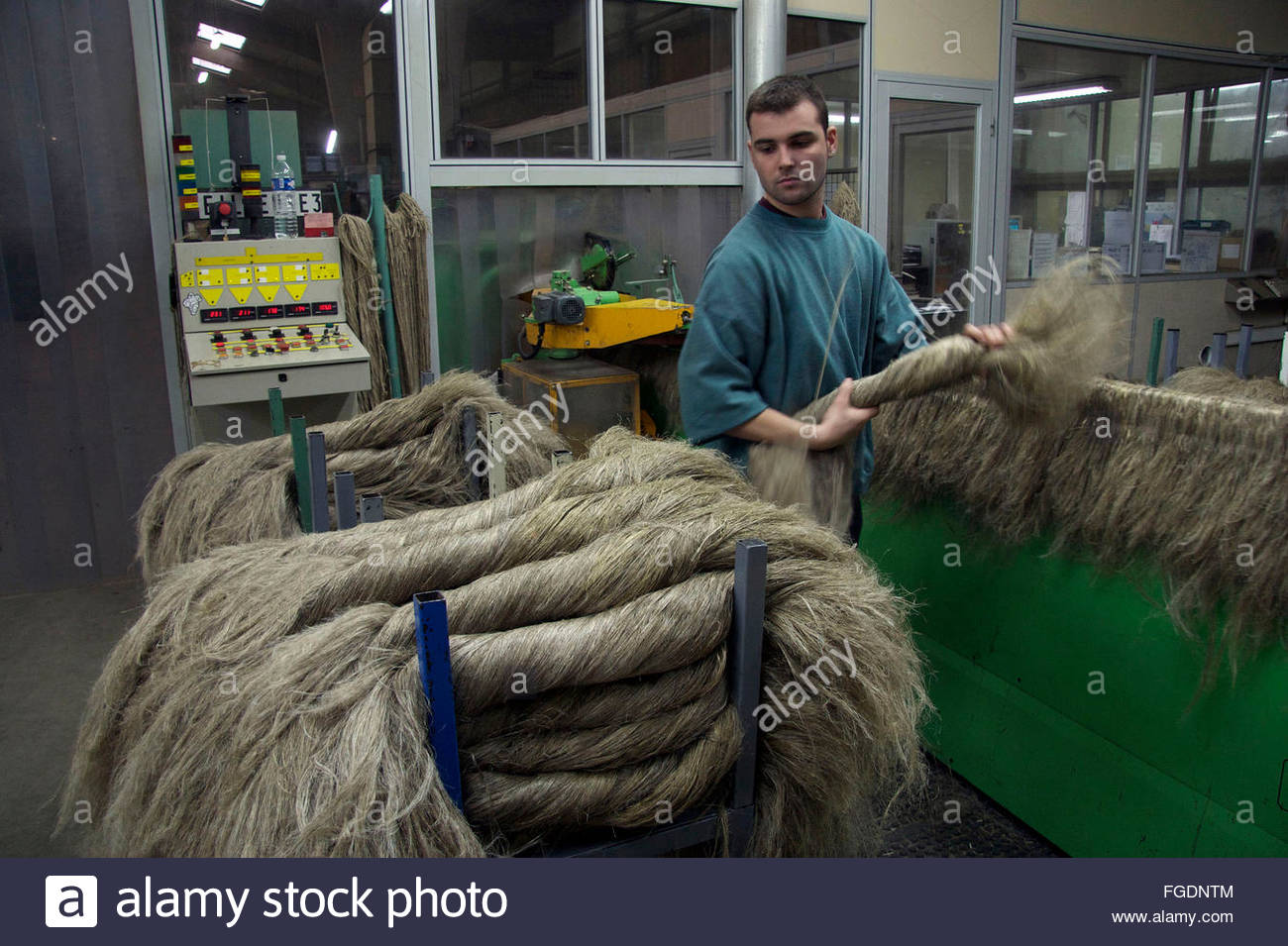 Nicolas Jourdaine is sorting the scutched flax fibers at the end of the scutching line, Terre de Lin, Saint Pierre - Stock Image