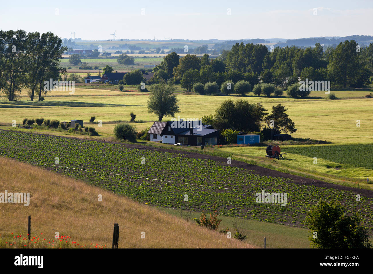 Swedish farmhouse and farmland, near Loderup, Skane, South Sweden, Sweden, Scandinavia, Europe - Stock Image