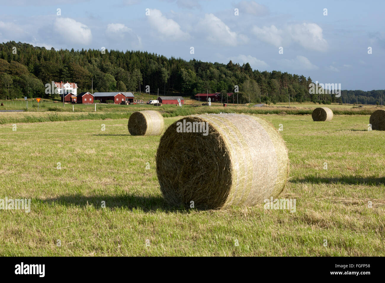 Typical Swedish farm with round hay bales, near Kode, Bohuslän, southwest Sweden, Sweden, Scandinavia, Europe - Stock Image