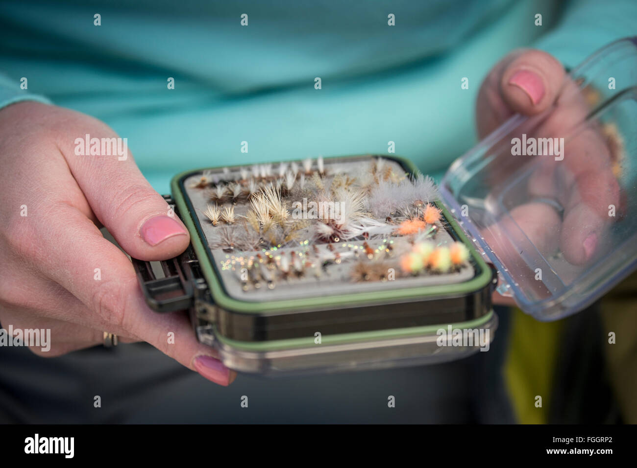 Woman chooses fishing flies from a fly box while fishing in Montana. - Stock Image