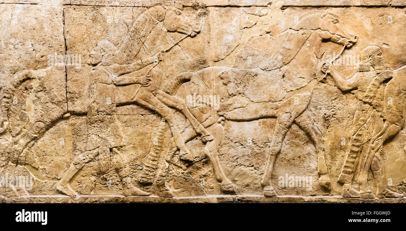 Lion hunt reliefs c.645-635 BC from Palace of King Ashurbanipal in Ninevah, Assyrian Gallery, British Museum, London, - Stock Image
