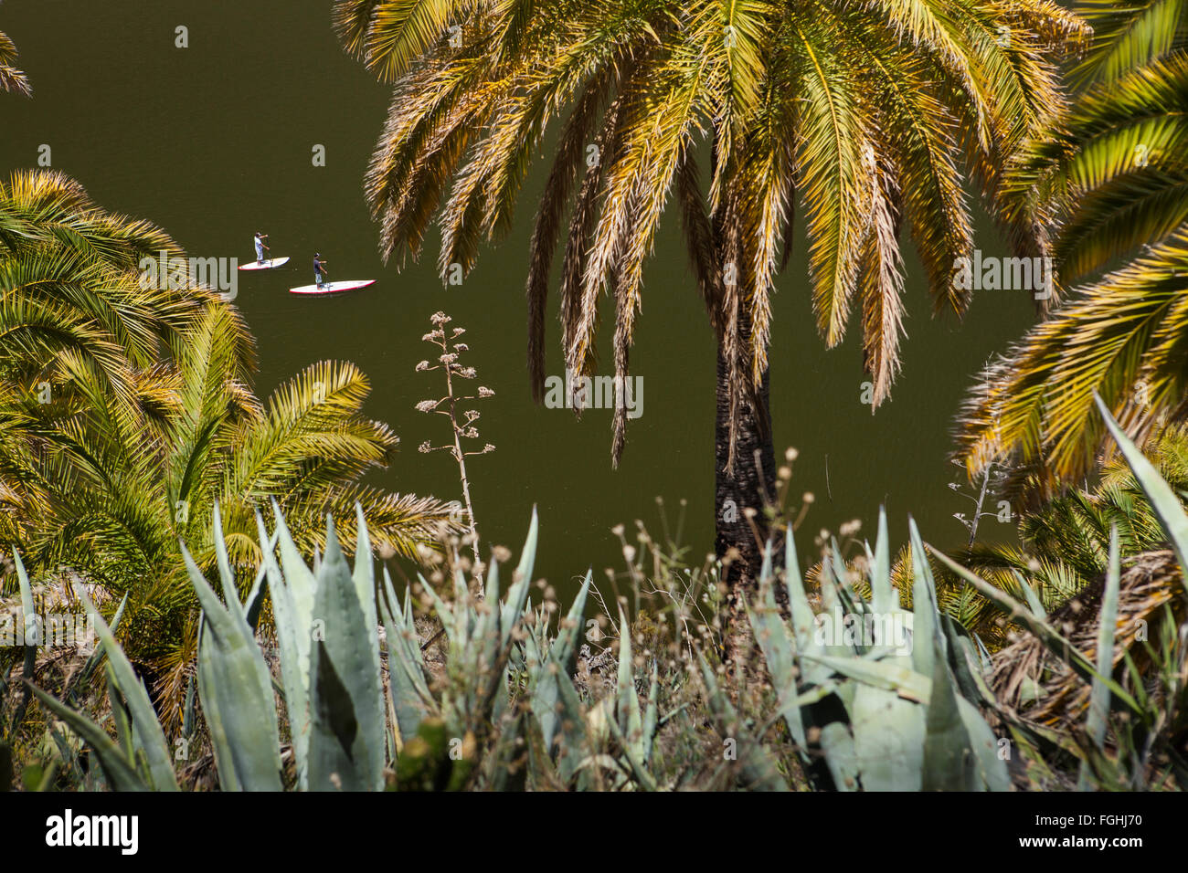 In between palms view of two persons stand up paddling in a dam - Stock Image