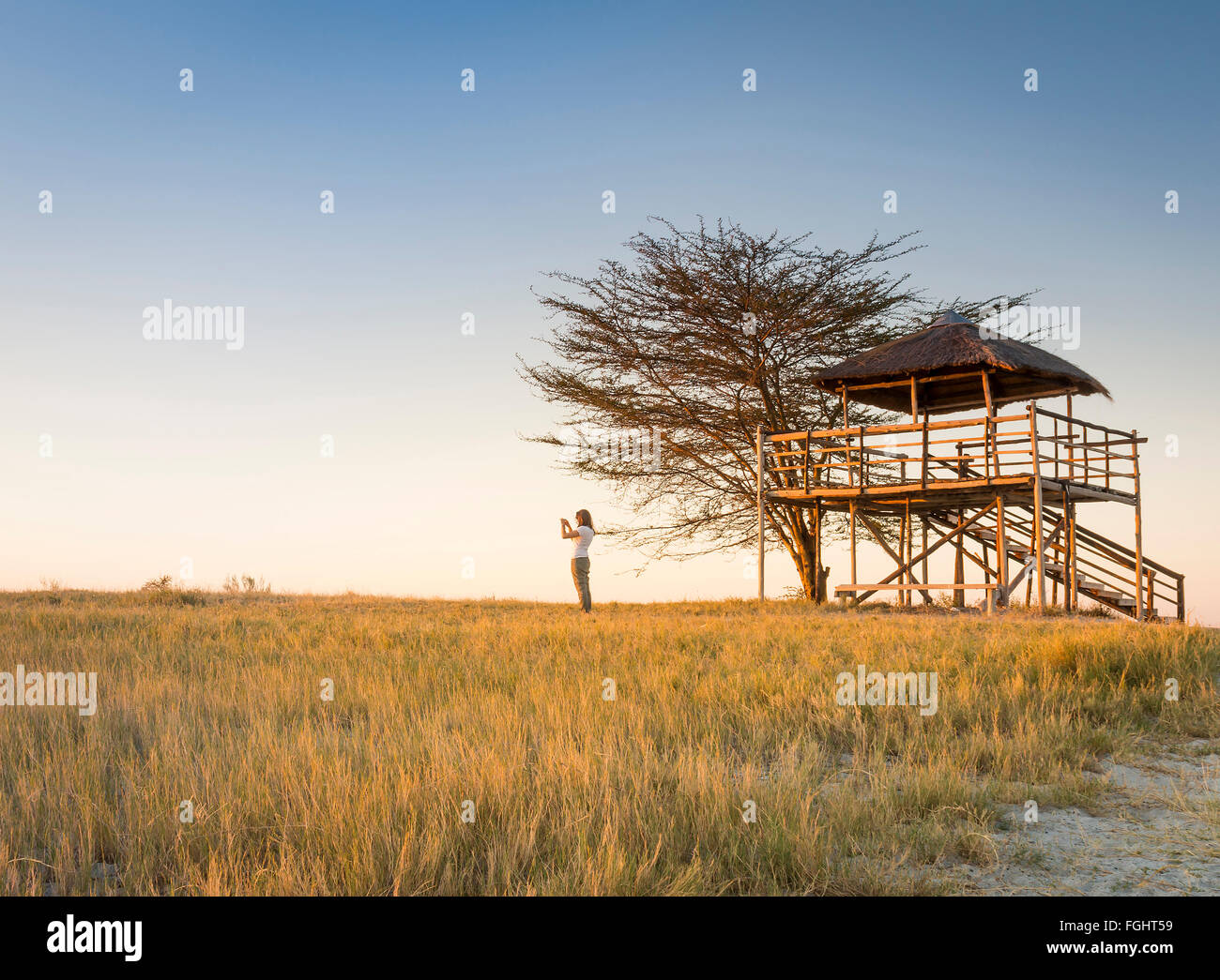 A young woman stands in long grass and takes photos of sunset while on safari in the Makgadikgadi Pans, Botswana, - Stock Image