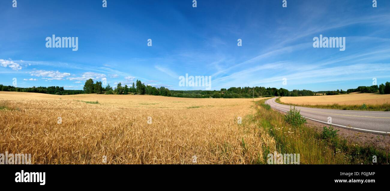 The field in the Finnish countryside - Stock Image